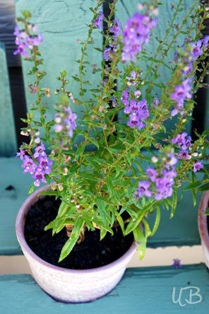 Purple-tiny-flowers